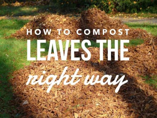 composting leaves leaf compost the right way