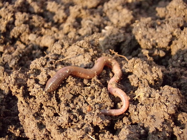 earthworms for composting
