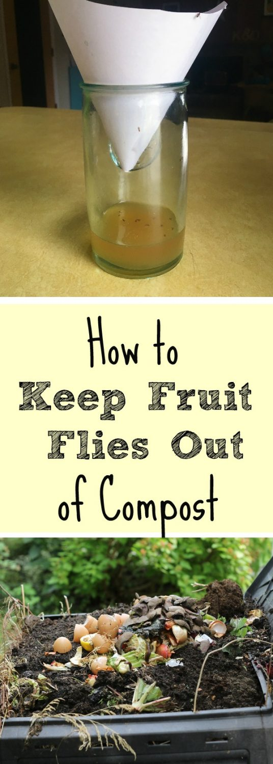 pinterest pin fruit flies composting solutions